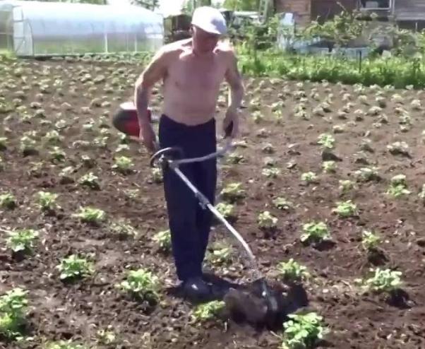Прополка картофеля триммером