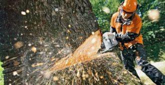 Как правильно спиливать деревья бензопилой?