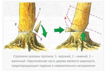 Как правильно валить деревья бензопилой?