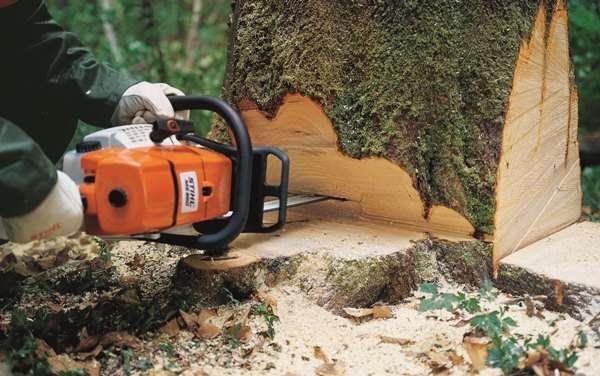Как спилить дерево бензопилой?