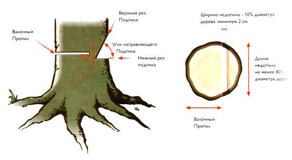 Как пилить бензопилой деревья?