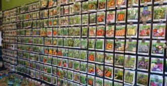 Голландские семена